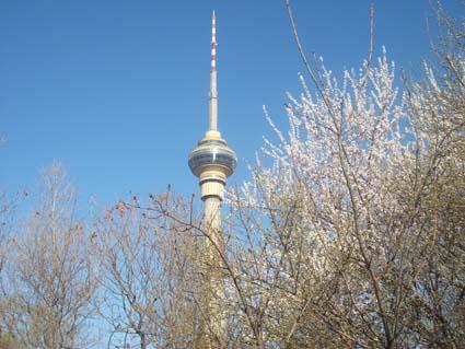 中央电视塔:春季踏青赏花的最高体验