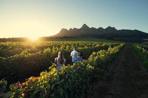 """""""南非开普酒展将于9月恭迎全球酒商"""